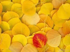 Мир любви и романтики: осенние листья