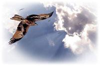 Сказка про чёрные крылья и тощую девчонку